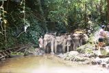 Elefantsafari