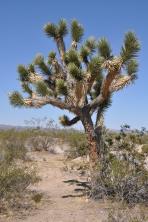 Mojave ørken