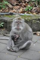 Bali - Monkey Forest Sanctuary