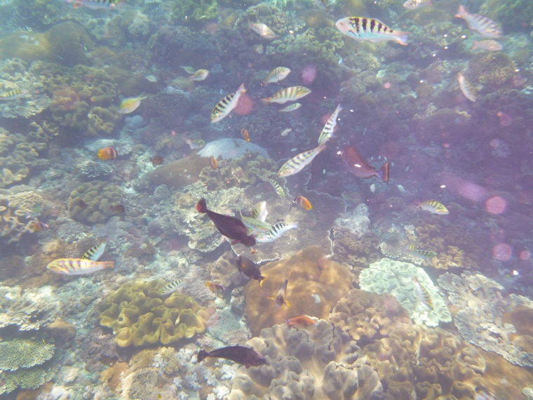 Bali - snorkling