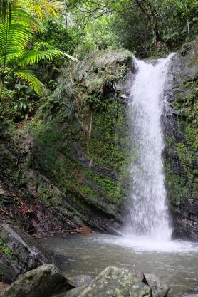 Regnskogen El Yunque